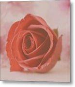 Rose #004 Metal Print