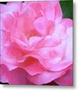 Rose 384 Metal Print