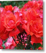 Rose Abundance Metal Print by Rona Black