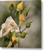 Rose And Buds Metal Print by Atul Daimari
