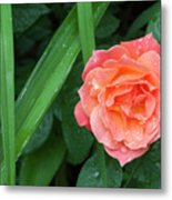 Rose And Day Lily Lives Metal Print