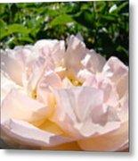 Rose Art Prints Canvas Sunlit Pink Rose Garden Baslee Troutman Metal Print