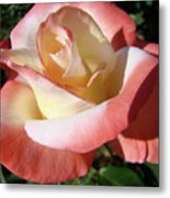 Rose Artwork Floral Pink White Roses Baslee Troutman Metal Print