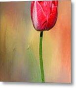 Red Tulip At Sunset By Kaye Menner Metal Print