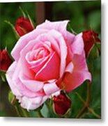Rose Attendants Metal Print