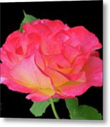 Rose Blushing Cutout Metal Print