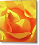 Rose Bright Orange Sunny Rose Flower Floral Baslee Troutman Metal Print