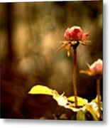 Rose Buds Metal Print