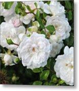 Rose Bush Metal Print
