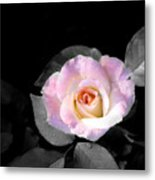 Rose Emergance Metal Print