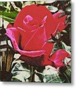Rose Evening,oil Metal Print