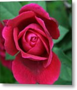 Rose Eye Metal Print