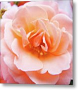 Rose Floral Art Print Peach Pink Roses Garden Canvas Baslee Troutman Metal Print