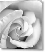 Rose Flower Black And White Monochrome Metal Print
