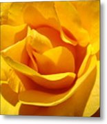 Rose Flower Orange Yellow Roses 1 Golden Sunlit Rose Baslee Troutman Metal Print