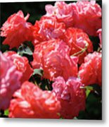 Rose Garden Art Prints Pink Red Rose Flowers Baslee Troutman Metal Print