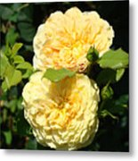 Rose Garden Floral Art Print Yellow Roses Canvas Baslee Troutman Metal Print