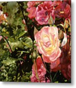 Rose Garden Metal Print by Teri Starkweather