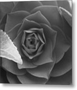 Rose In Black Metal Print