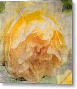 Rose In Bloom  Metal Print