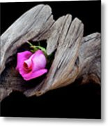Rose In Driftwood 2 Metal Print