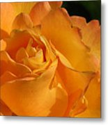 Rose In Ruffles Metal Print