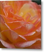 Rose In Yellow And Pink I Metal Print