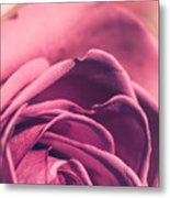 Rose Morning Light Metal Print