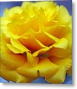 Rose Moss Flower Metal Print