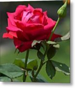 Rose Of Romance Metal Print