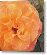 Rose Of Seville Metal Print