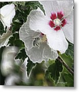 Rose Of Sharon And Bee Metal Print