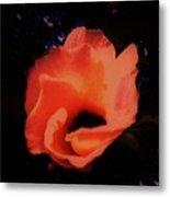 Rose Of Sharon Orange On Black Metal Print