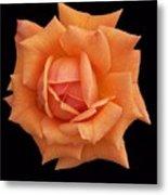 Rose On Black Velvet Metal Print