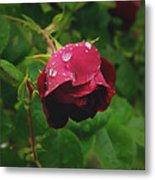 Rose On The Vine Metal Print