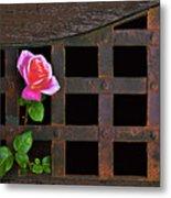 Rose On Trellis Metal Print