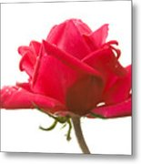 Rose On White Metal Print
