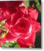Rose Pink With Guest Metal Print