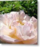 Rose Pink Sunlit Rose Flower Art Prints Baslee Troutman Metal Print