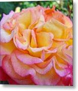 Rose Pink Yellow Rose Flower 2 Rose Garden Giclee Prints Baslee Troutman Metal Print