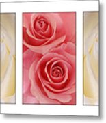Rose Series  Metal Print