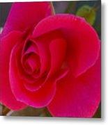 Rose Simplicity Metal Print