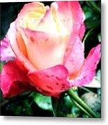 Rose Solitude  Metal Print
