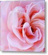 Rose Spiral Art Pink Roses Floral Baslee Troutman Metal Print
