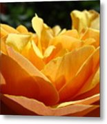 Rose Sunlit Orange Rose Garden 7 Rose Giclee Art Prints Baslee Troutman Metal Print