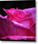 Rose Tryptich Metal Print