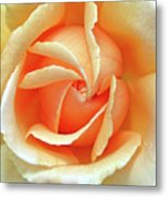Rose Unfolding Metal Print