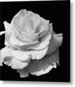 Rose Unfurled In Black And White Metal Print