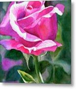 Rose Violet Bud Metal Print