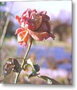 Rose. Metal Print